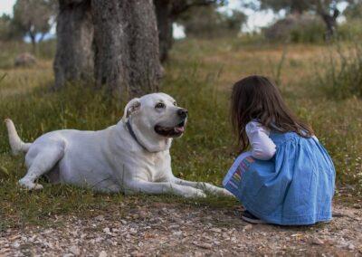 Barátaink, az állatok