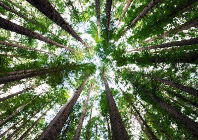 Minden négyzetméterre fát! – program